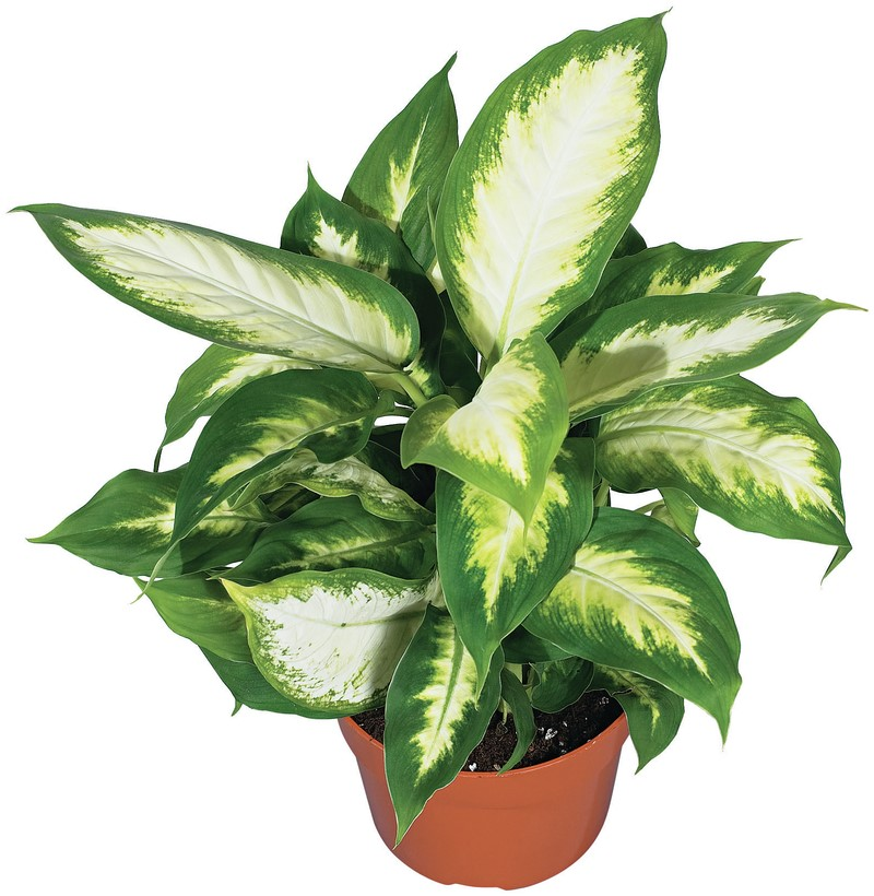 The Home Depot Bring Spring Green Indoors With 5 Easy Houseplants