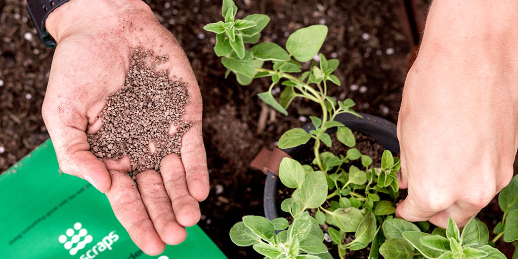 Feed plants with fertilizer and potting soil