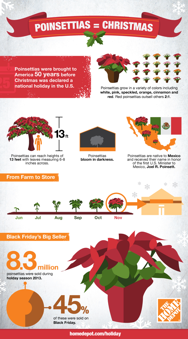 The Home Depot | How Poinsettias Ended Up in Your Home this Holiday