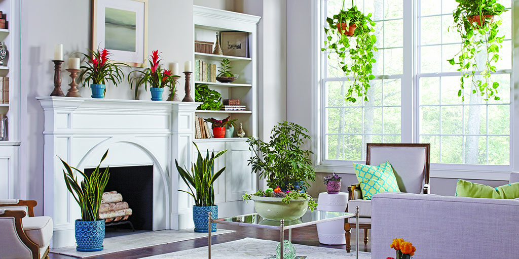 Light-filled living room with plants