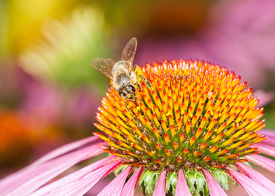 Bee on bright flower
