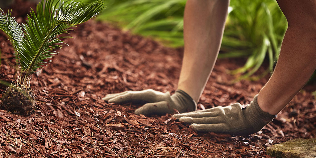Mulch helps plant health