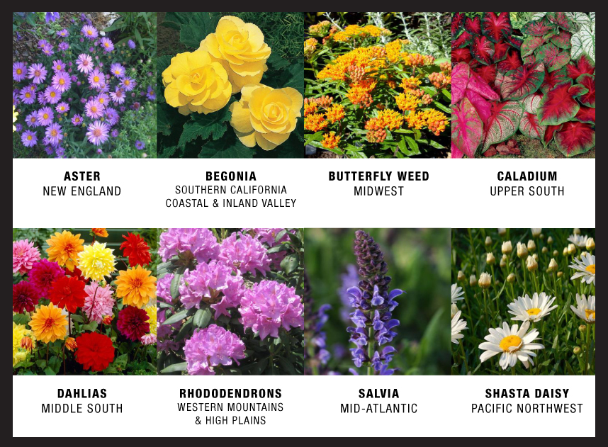 Check out some plants that are unique to specific regions, and see if you can spot them in your local store.