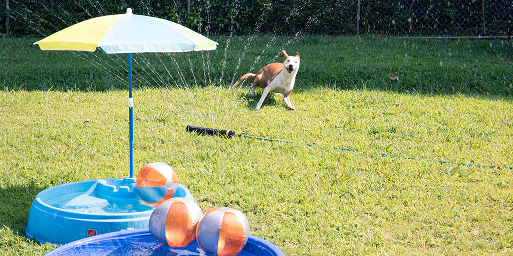 Dog playing in sprinkler