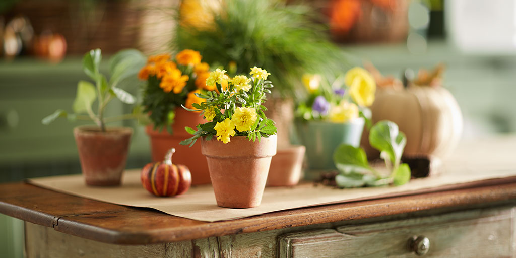 Potted plants and pumpkins