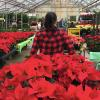 Weiss employee carrying poinsettias
